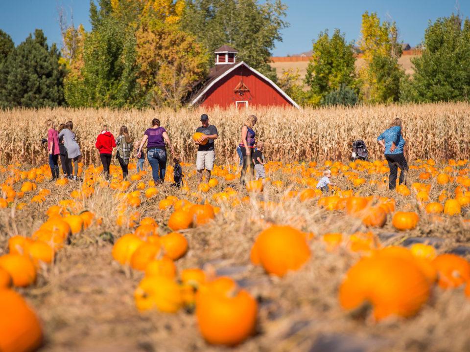 The Pumpkin Festival at Chatfield Farms. Photo courtesy of Denver Botanic Gardens