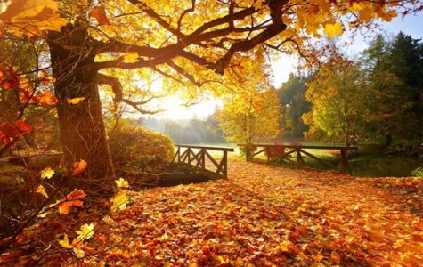 The Leaves Are Falling of The Trees, Making New Opportunities